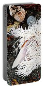 Beach Wares - Shells - Feather Portable Battery Charger