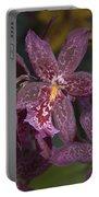 Beallara 3253 Portable Battery Charger