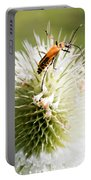 Beetle On White Spiky Wild Flower Portable Battery Charger