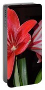 Belladonna Portable Battery Charger