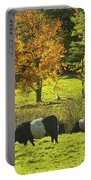 Belted Galloway Cows Grazing On Grass In Rockport Farm Fall Maine Photograph Portable Battery Charger by Keith Webber Jr