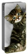 Benny The Kitten Playing Portable Battery Charger