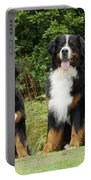 Bernese Mountain Dogs Portable Battery Charger
