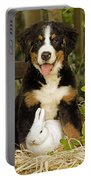 Bernese Mountain Puppy And Rabbit Portable Battery Charger