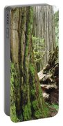 Big California Redwood Tree Forest Art Prints Portable Battery Charger