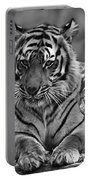 Big Cats 10 Portable Battery Charger
