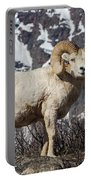 Big Horn Ram In Spring Portable Battery Charger