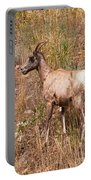 Big Horn Sheep Ewe Portable Battery Charger