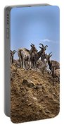 Bighorn Sheep At Blue Mesa Reservoir Portable Battery Charger