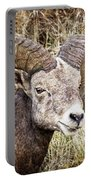 Bighorn Sheep In Field Portable Battery Charger