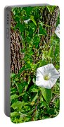 Bindweed In Pipestone National Monument-minnesota Portable Battery Charger