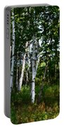 Birch Grove In The Sunlight Portable Battery Charger