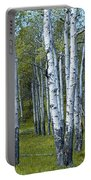 Birch Tree Grove No. 0133 A Fine Art Photograph Portable Battery Charger