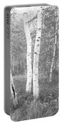 Birch Trees In A Forest, Acadia Portable Battery Charger