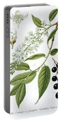 Bird Cherry Cerasus Padus Or Prunus Padus Portable Battery Charger