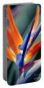 Bird Of Paradise - Strelitzia Reginae  Portable Battery Charger