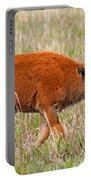 Bison Calf Grand Teton National Park Portable Battery Charger