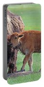 Bison With Young Calf Portable Battery Charger