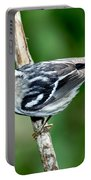 Black-and-white Warbler Mniotilta Varia Portable Battery Charger