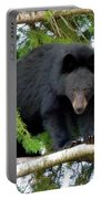 Black Bear 2 Portable Battery Charger
