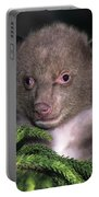 Black Bear Cub Portrait Wildlife Rescue Portable Battery Charger