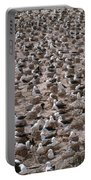Black-browed Albatross Nesting Colony Portable Battery Charger