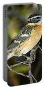 Black-headed Grosbeak Female Portable Battery Charger