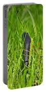 Black Racer Back Portable Battery Charger by Al Powell Photography USA