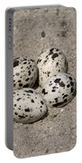 Black Skimmer Eggs Portable Battery Charger