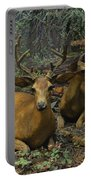 Black Tail Deer Portable Battery Charger
