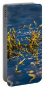 Bladder Seaweed, Fucus Vesiculosus Portable Battery Charger