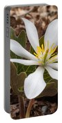 Blood Root 1 Portable Battery Charger