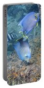 Blue Angelfish Feeding On Coral Portable Battery Charger