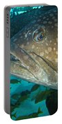 Blue-eyed Grouper Fish Portable Battery Charger