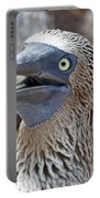 Blue Footed Boobie Galapagos Portable Battery Charger