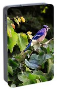Blue Jay In A Tree Portable Battery Charger