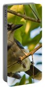 Blue Jay In Hiding Portable Battery Charger