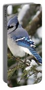 Blue Jay On Hemlock Portable Battery Charger