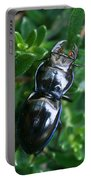 Blue Lined Beetle Portable Battery Charger