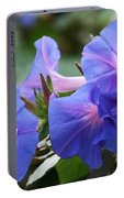 Blue Morning Glory Wildflowers - Convolvulaceae Portable Battery Charger