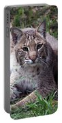 Bobcat 17 Portable Battery Charger