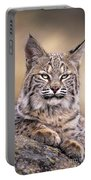 Bobcat Cub Portrait Montana Wildlife Portable Battery Charger by Dave Welling