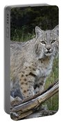 Bobcat On The Prowl Portable Battery Charger