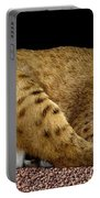Bobcat Portable Battery Charger by Rose Santuci-Sofranko