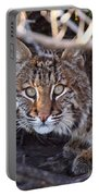Bobcat Squared Portable Battery Charger