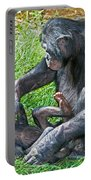 Bonobo Adult Playing With Baby Portable Battery Charger