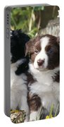 Border Collie Dog, Two Puppies Portable Battery Charger