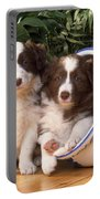 Border Collie Puppies In Plant Pot Portable Battery Charger