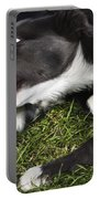 Border Collies Playing Portable Battery Charger