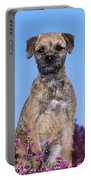 Border Terrier Dog, In Heather Portable Battery Charger